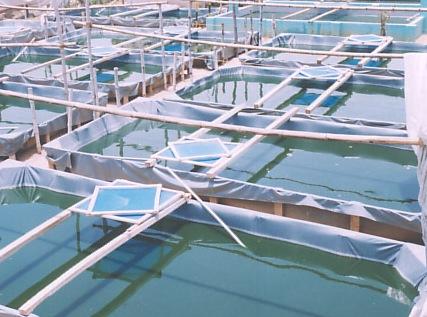 Algae Biodiesel Pond