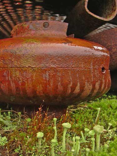 rust-lichen.jpg