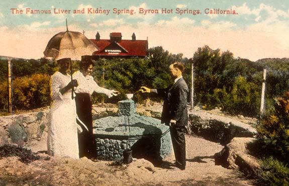 Liver & Kidney Springs